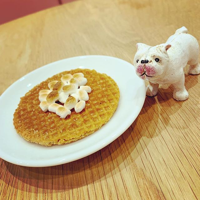 ちょっとだけ食べたい時に。コーヒーによく合うストロープワッフルは如何ですか?薄いクリスピーワッフルにシロップをサンドした、オランダの伝統的なお菓子です。軽くトーストして中のシロップがトロっとした状態でお召し上がりいただきます。#フレンチブルドッグ #フレブル #ブヒ #buhi #frenchbulldog #frenchbull #dog #大阪 #犬 #niima #niimacafe #niimacafeetsalon #cafe #coffee #ニーマカフェ #ニーマカフェエサロン #南森町 #大阪天満宮 #大阪市北区 #東天満カフェ #カフェスタグラム #大阪カフェ巡り #大阪カフェ #instacafe #coffeestand #coffeeshop #stroopwaffles #ストロープワッフル