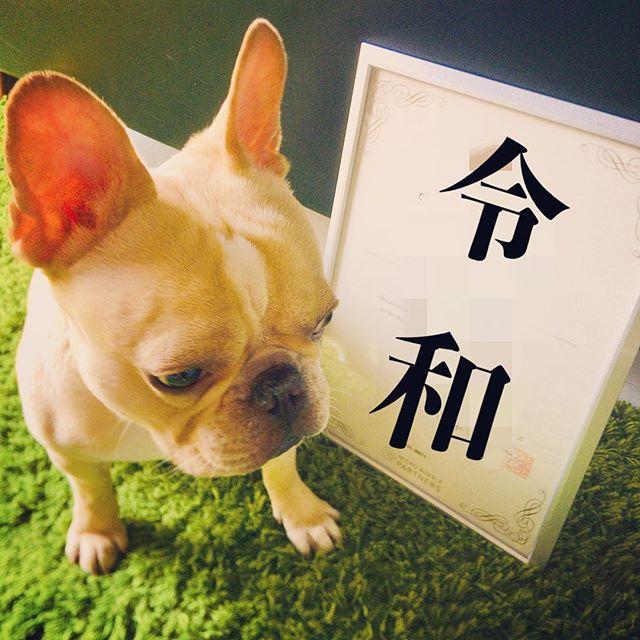 ️令和5月7日(火)より通常営業致します。只今新メニュー準備中!ご期待ください。#フレンチブルドッグ #フレブル #ブヒ #buhi #frenchbulldog #frenchiephotos #dailyfrenchie #frenchbull #dog #大阪 #犬 #niima #niimacafe #niimacafeetsalon #cafe #coffee #ニーマカフェ #ニーマカフェエサロン #南森町 #大阪天満宮 #大阪市北区 #東天満カフェ #カフェスタグラム #大阪カフェ巡り #大阪カフェ #instacafe #coffeestand #coffeeshop #令和 #祝令和