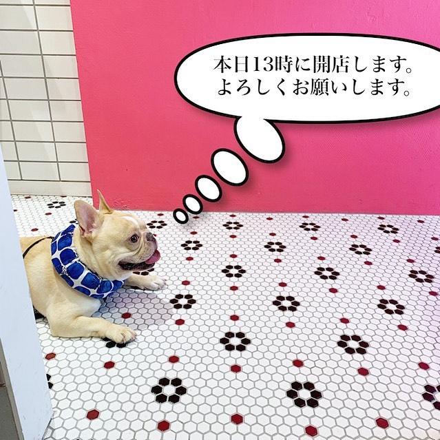 おはようございます。本日、都合により13時に開店いたします。よろしくお願いします。